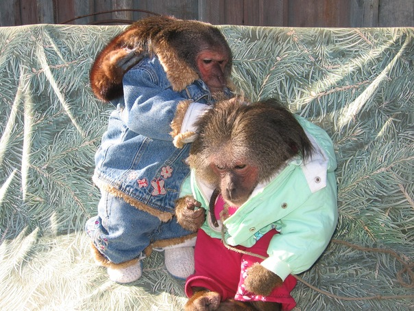 Номер с обезьянкой photo